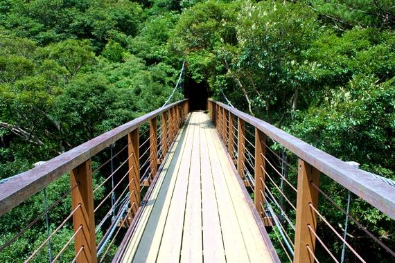 沖縄本島最大の滝 北部やんばるの比地大滝