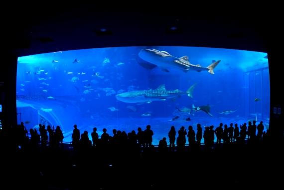 沖縄観光の定番 美ら海水族館・ちゅら海水族館