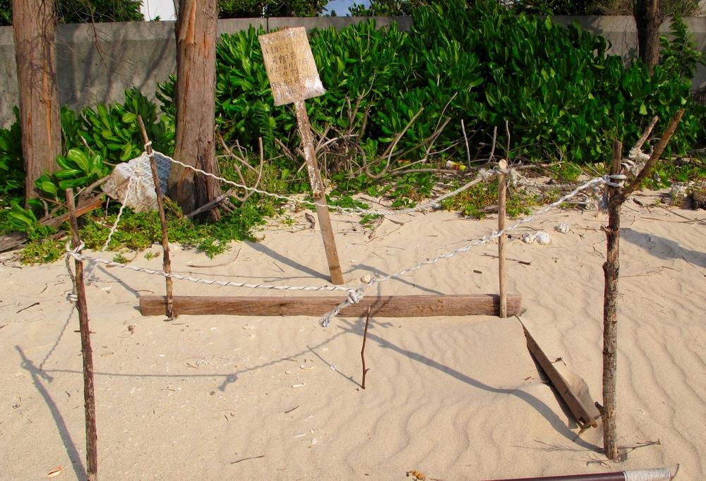沖縄恩納村の海でウミガメの放流 産卵とふ化