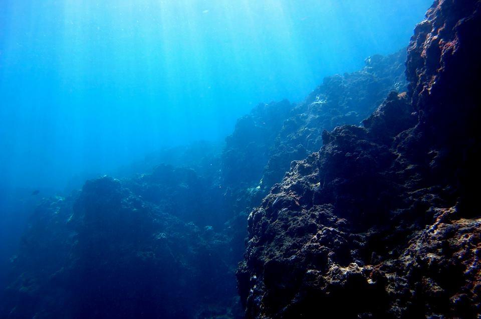 沖縄恩納村でダイビングのワーキングスタディ・研修生募集